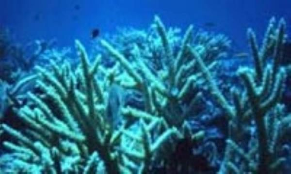 خواص درمانی کلسیم مرجانی